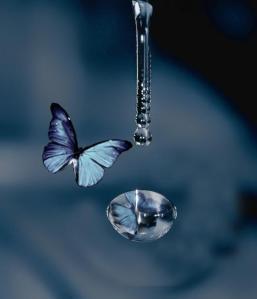 Resultado de imagem para Amor nasceu taça, borboleta voo