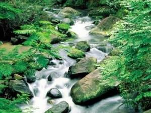Limpe sua mente, como um riacho faz com suas águas