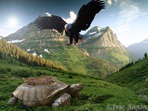 águia e tartaruga