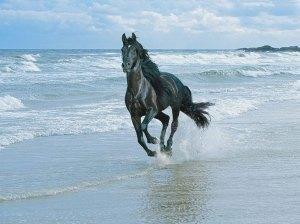 Ser livre como um cavalo